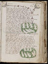 Voynich_Manuscript_(141)