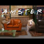 """""""Central Fluff: 'Friends' Remade With Hamsters"""""""