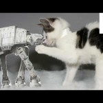 Kittens Recreate 'Star Wars' with Jedi Meow Tricks