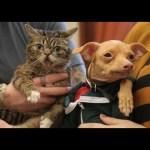 Lil Bub Meets Tuna the Dog