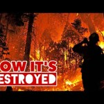 Wildfires – HOW IT'S DESTROYED