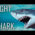 How To Fight A Shark – EPIC HOW TO