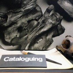 La Brea Tar Pits Cataloging