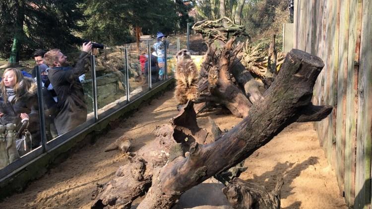 Tierpark Essehof Erdmännchen