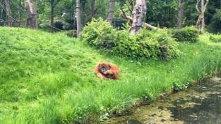 Leipzig Zoo orangutans