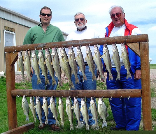 Walleyes on spinners