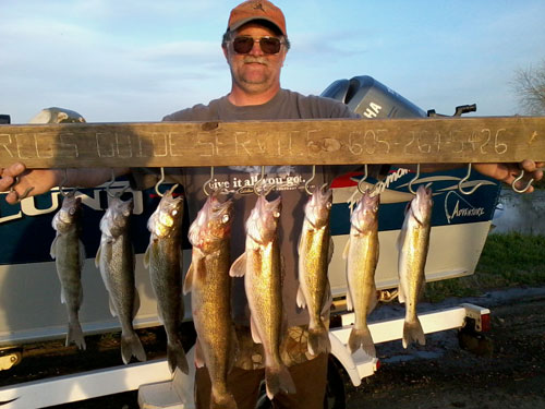Great days catch of walleye