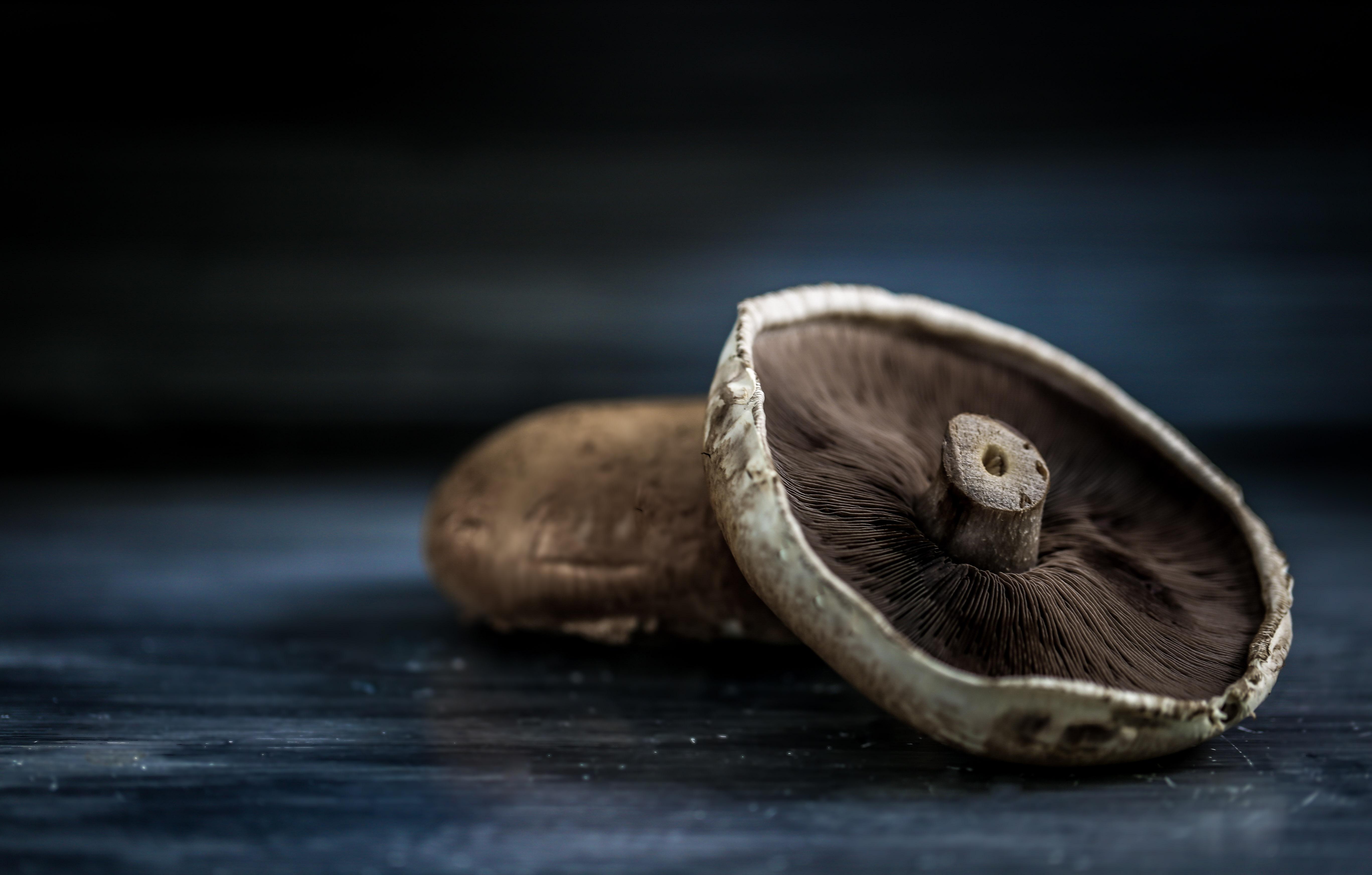 Close up Portobello Champignon Food Photography