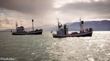 ออกเรือดูปลาวาฬที่เมือง Husavik