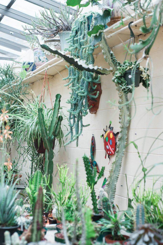 Spring Style - Manitou Cactus