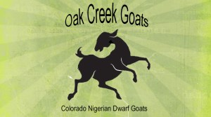 Oak Creek Goats