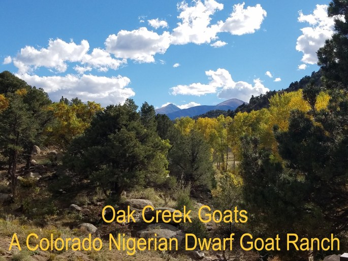 oakcreek goats..the ranch