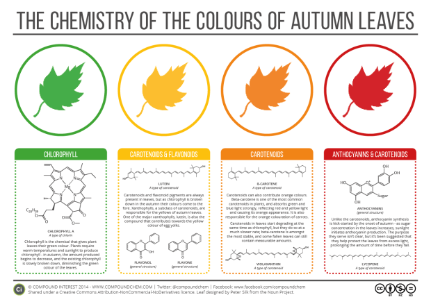 chemistry-of-autumn-leaves-2015