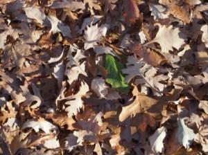 One Leaf Among Many