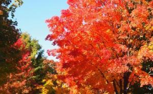 Oak Eternal Fall Colors