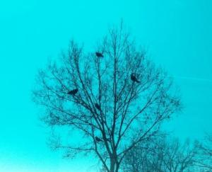 6 Crows Waiting