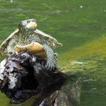 May 12 – Nature at Home: #INslowmoments