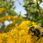 Nov 23 – Monthly Nature Volunteer Day