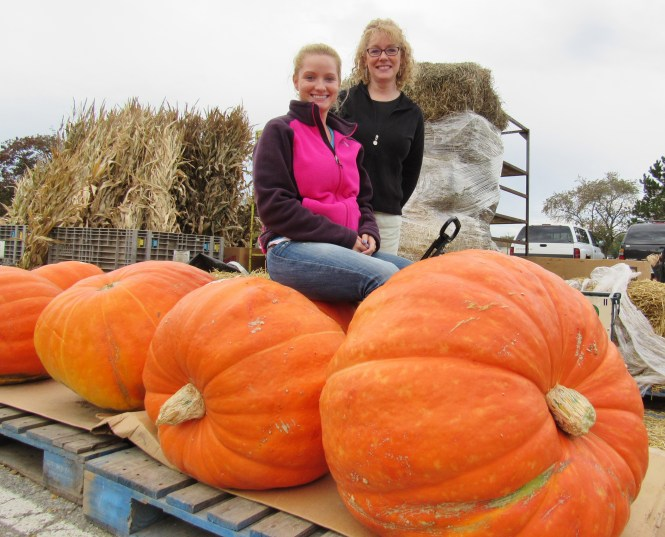 Giant pumpkins at the Oakland County Market.
