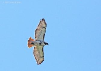 Photos courtesy of Janet Hug - Oakland Audubon Society