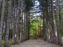 trees near estate