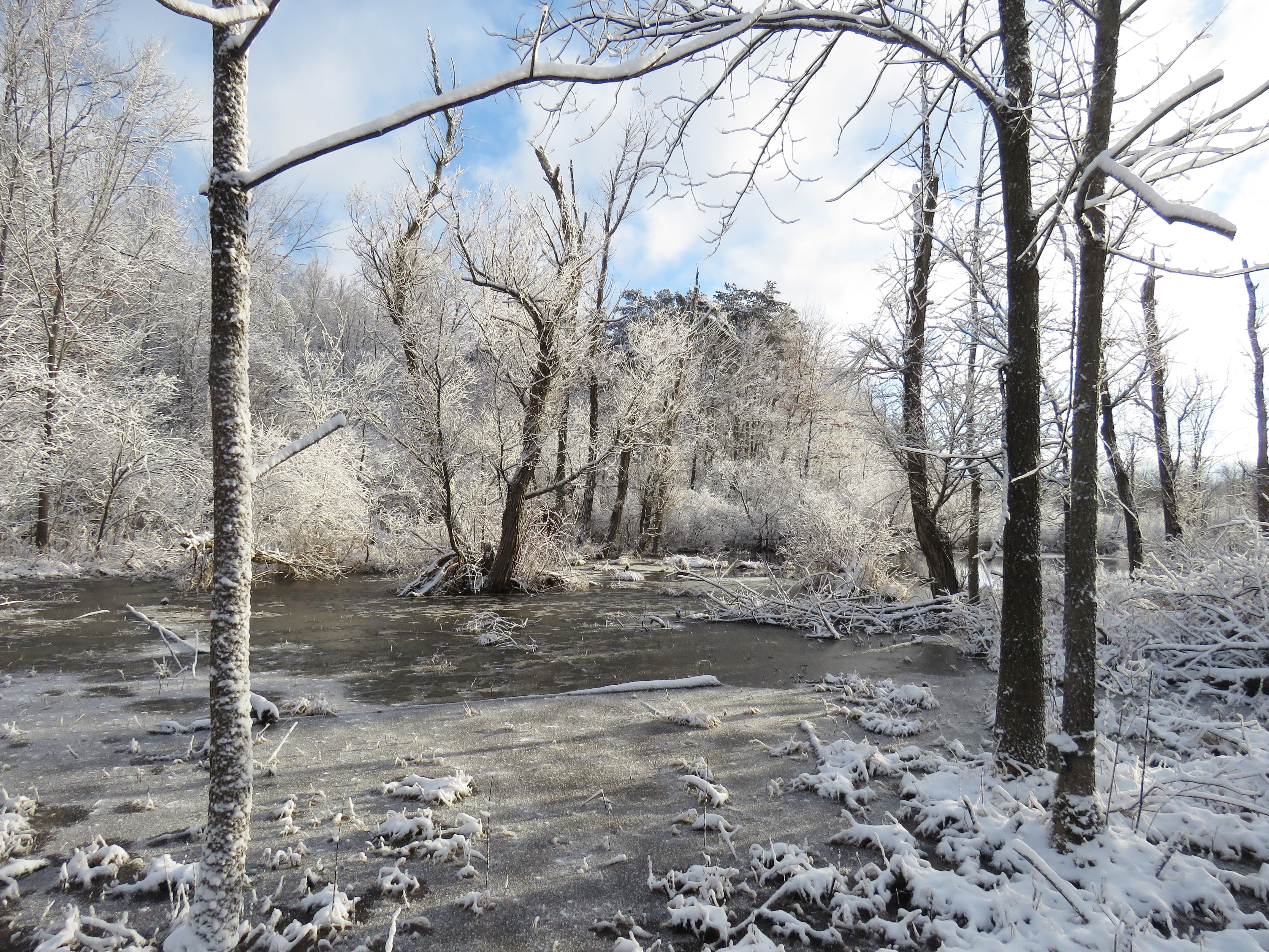 An icy swamp on a frosty morning