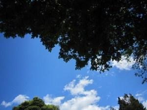 Oakland Sky