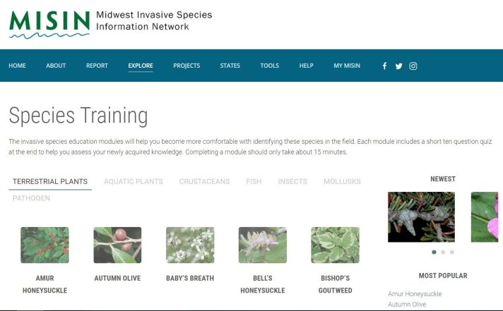 MISIN offers training modules on many invasive species. Learn invasive species identification.