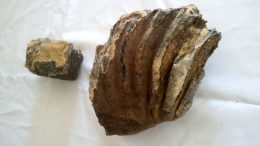 Mammoth Tooth Found In SF At Transbay Transit Center