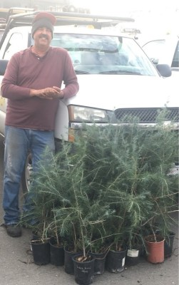For much of the day at Skyline High, OUSD gardener and landscaper, Tom O'Neill will be planting trees across the campus.
