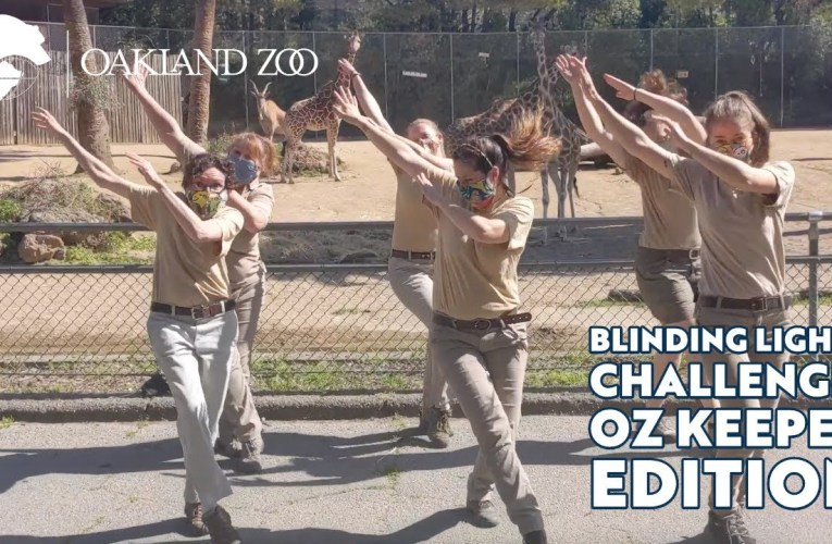 Blinding Lights Challenge: Oakland Zoo Keeper Edition Video Shows No Black Zookeepers