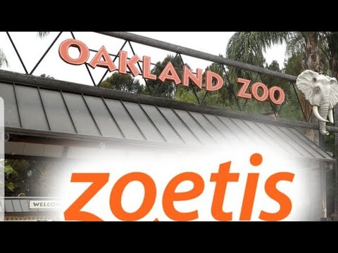 Oakland Zoo First In The Country To Provide Covid Vaccines To Animals By Joseph Armendariz