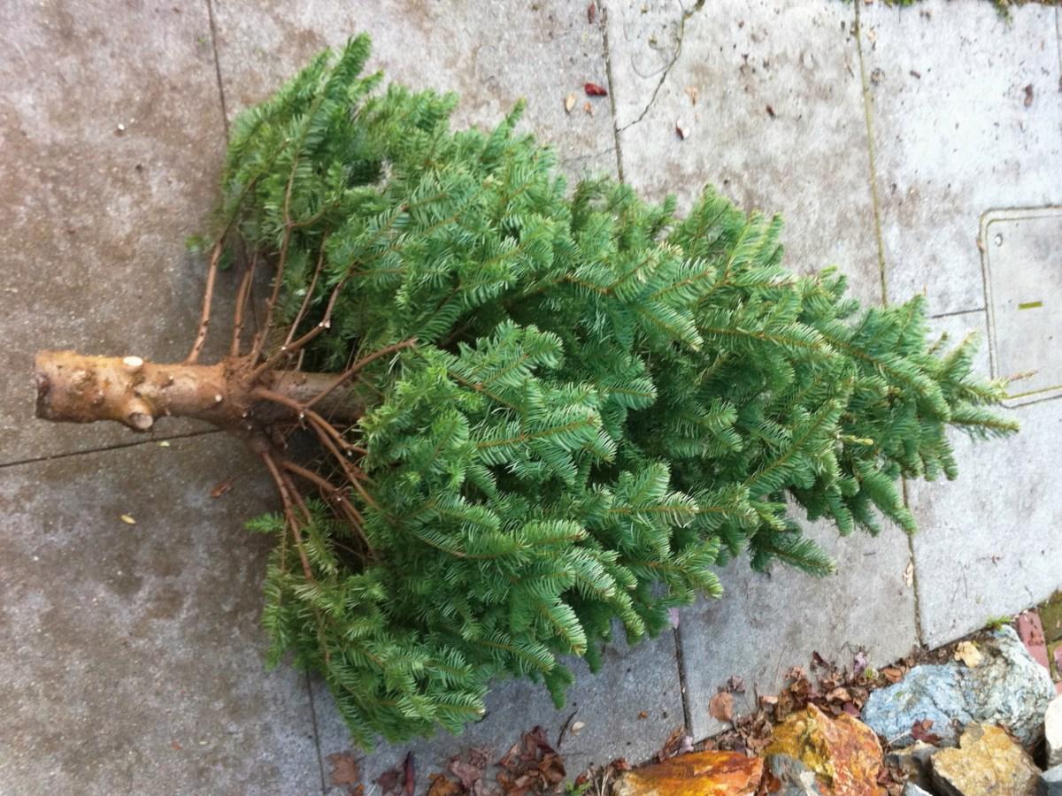 christmas tree on sidewalk