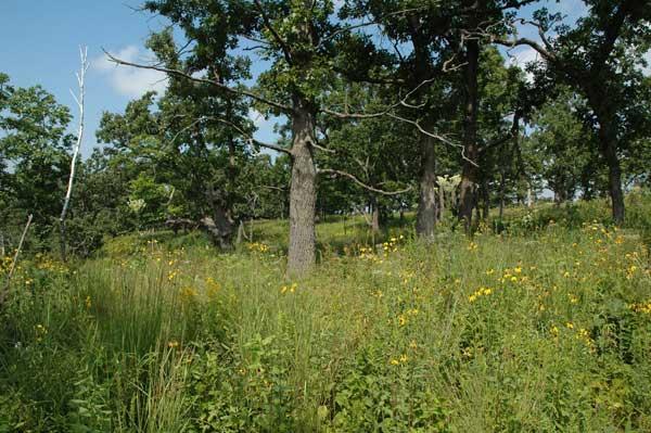 https://i2.wp.com/oaksavannas.org/photos/savanna-unit12b-0312.jpg