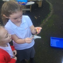 Science Waterproof Investigation 1