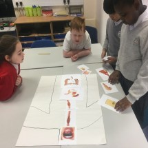 Investigating the Digestive System 1