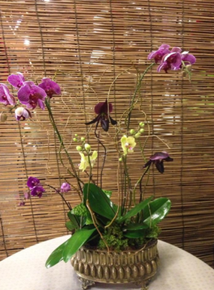 Orchid Arrangement - phalaenopsis and lady slipper orchids