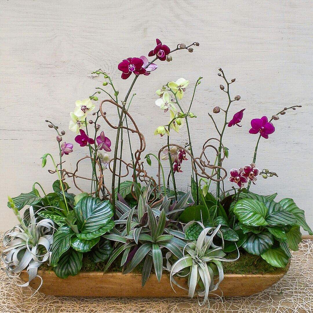 Phael Orchid Arrangement In Dough Bowl Oak Street Garden