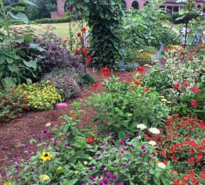 Community Garden - purslane,gomphrena, moonvine on arbor, zinnias,