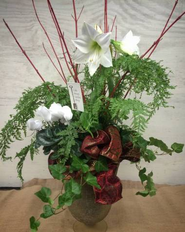 Holiday amaryllis arrangement