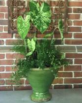 Planted Pot with Frog In a Blender Caladium