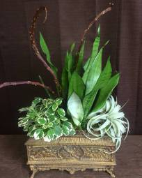 Indoor Container - Mother-In-Laws-Tongue, Swedish Ivy, Air Plant, Fan Tail Willow Branches