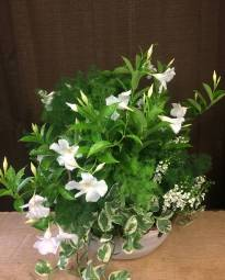Wedding Arrangement - White Mandevilla