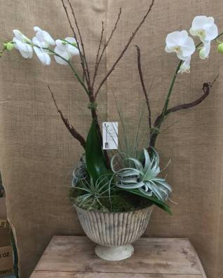 Orchid Arrangement - Air Plants