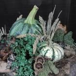 Fall Arrangement - Pumpkins, Pilea and Dried Materials