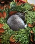 Liam found a wreath...