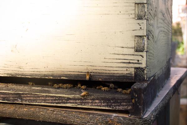 Ghost Town Farm Bees