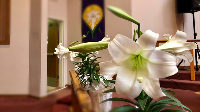 Easter Service, Lily Trumpet Bloom, Oakwood United Methodist Church, Lubbock Texas