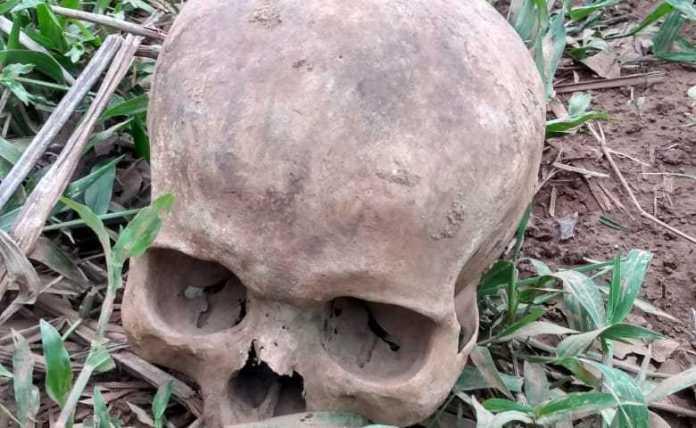 Crânio humano é encontrado no Ramal do Japonês, em Senador Guiomard