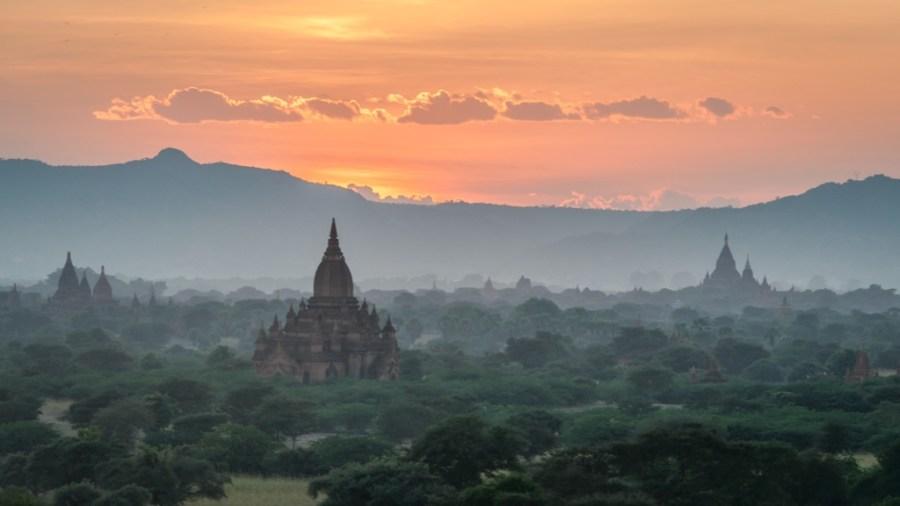 Apus in Bagan